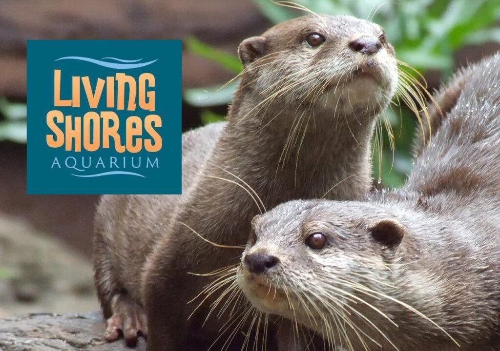 Living Shores Aquarium